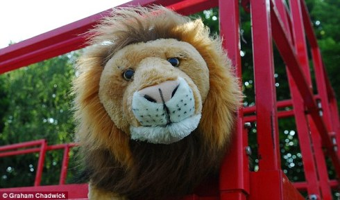 3503A1FD00000578-3635177-England_s_lion_mascot_Leo_watches_on_as_England_train_at_their_C-a-51_1465561602930